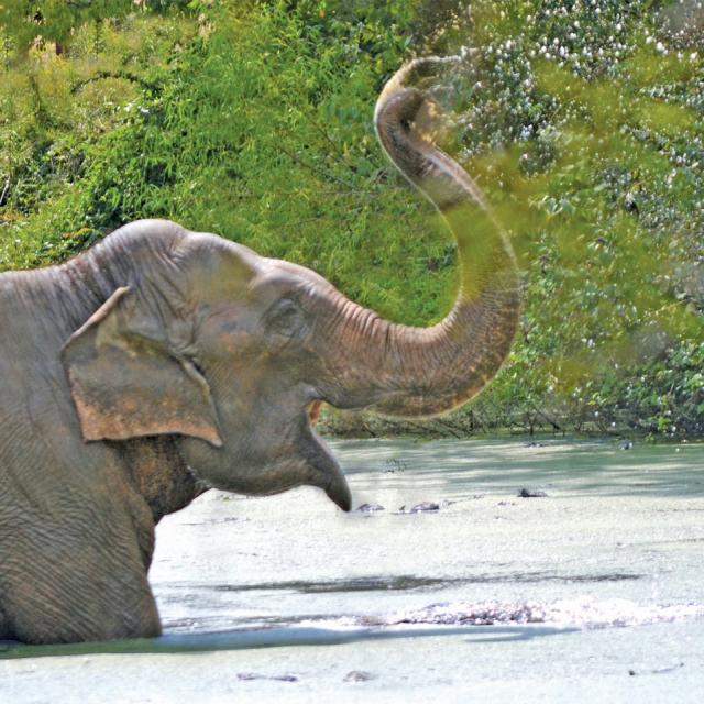 Photo Of Asian Elephant Playing In Water At The Elephant Sanctuary In Tennessee
